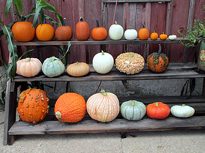 Assorted pumpkins.