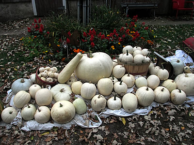 White pumpkins make great wedding decorations.