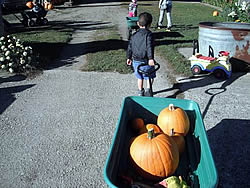 Boy with wagon of pumpkins.